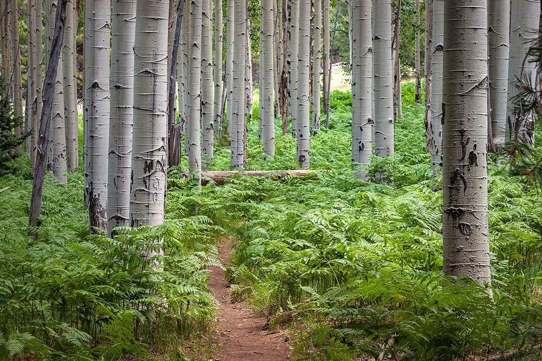 Aspen-Nature-Loop-Flagstaff-Hikes