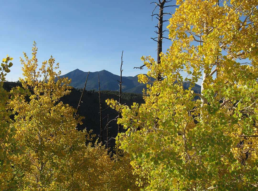 Elden-Lookout-Trail-Autumn