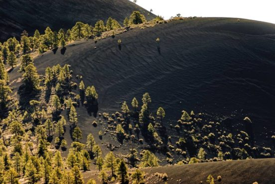 Sunset Crater Forest Featured