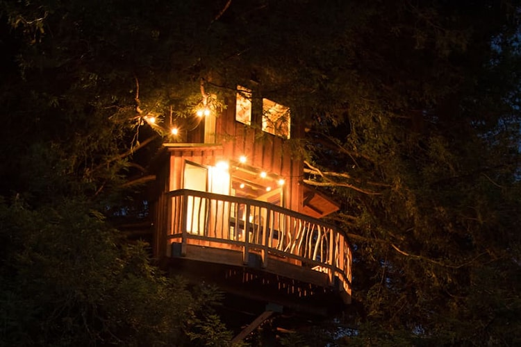 Sequoia Treehouse in Wine Country