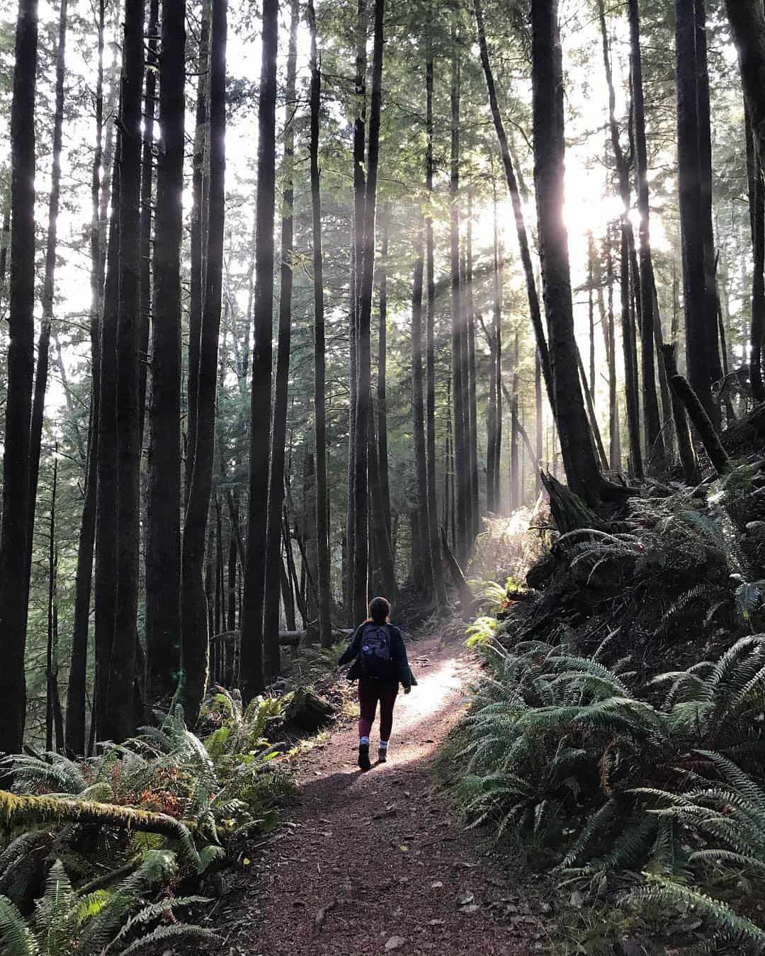 oregon coast trail forest