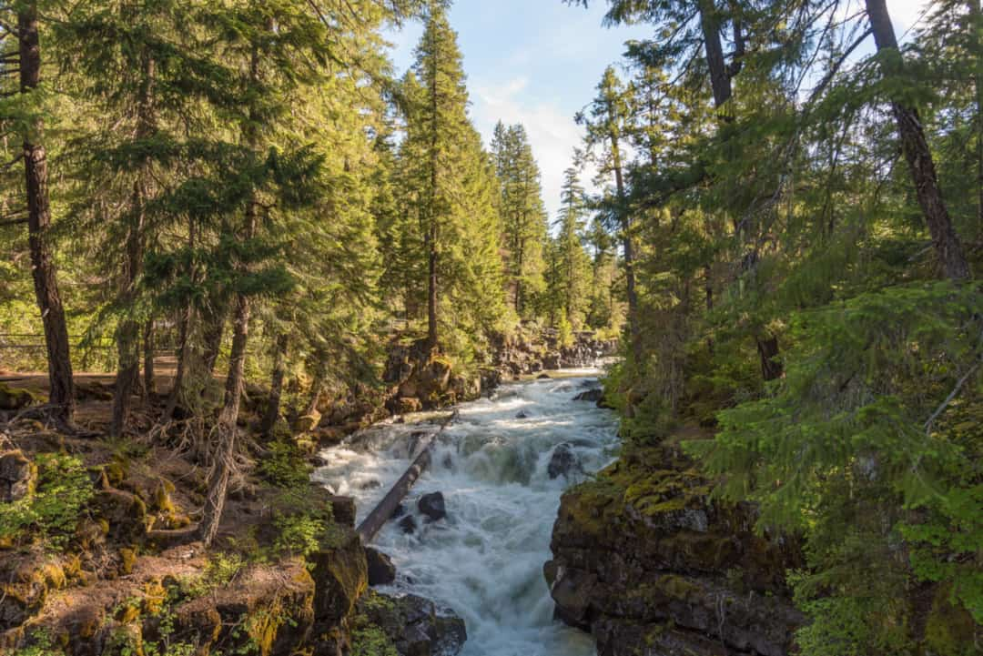 Rogue River-Siskiyou National Forest