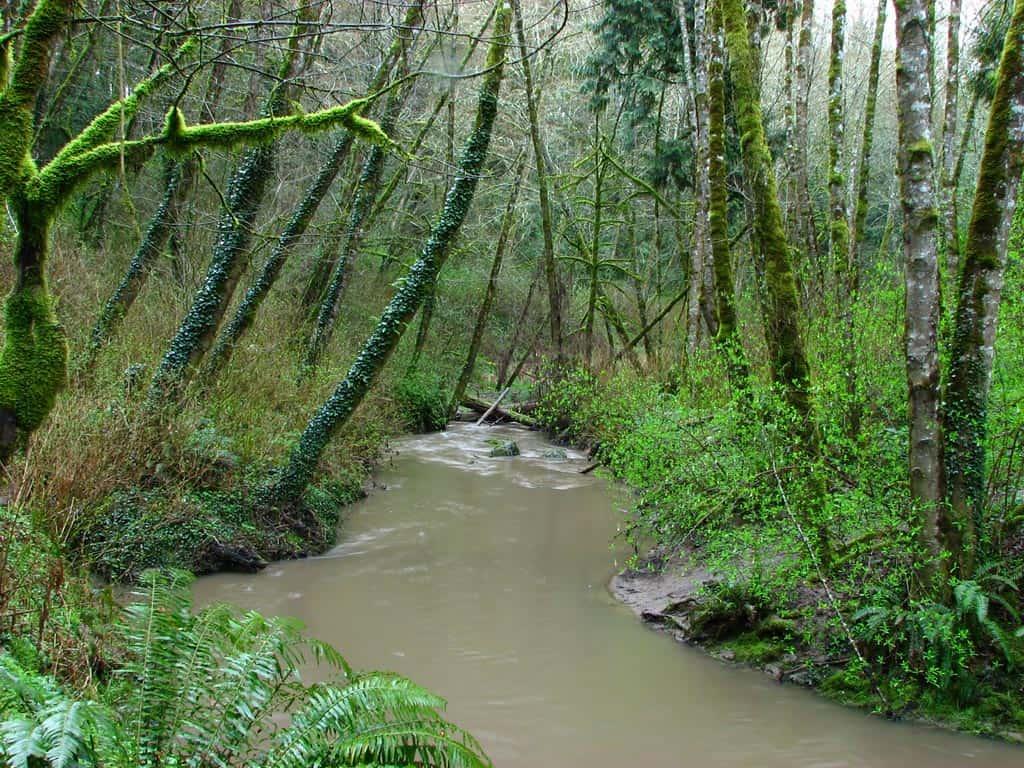 tryon creek natural area