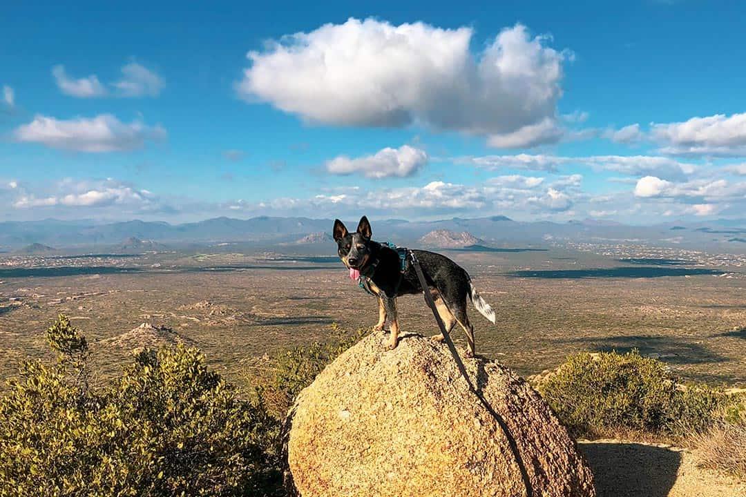 bodhi hiking dog