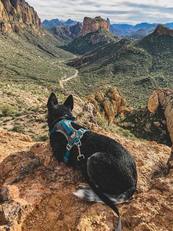 dog hiking phoenix arizona