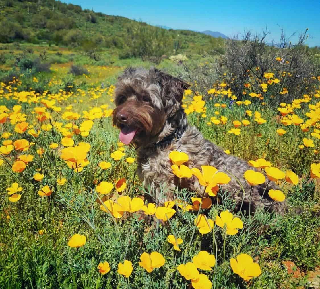 phoenix dog hikes