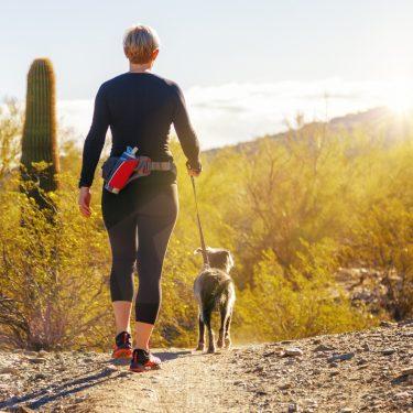 phoenix hikes with doggos