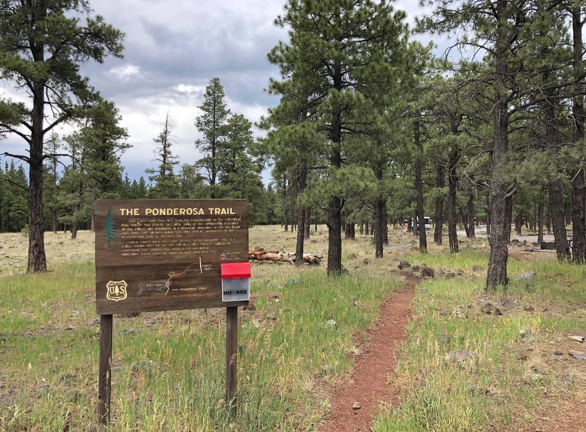 the ponderosa trail
