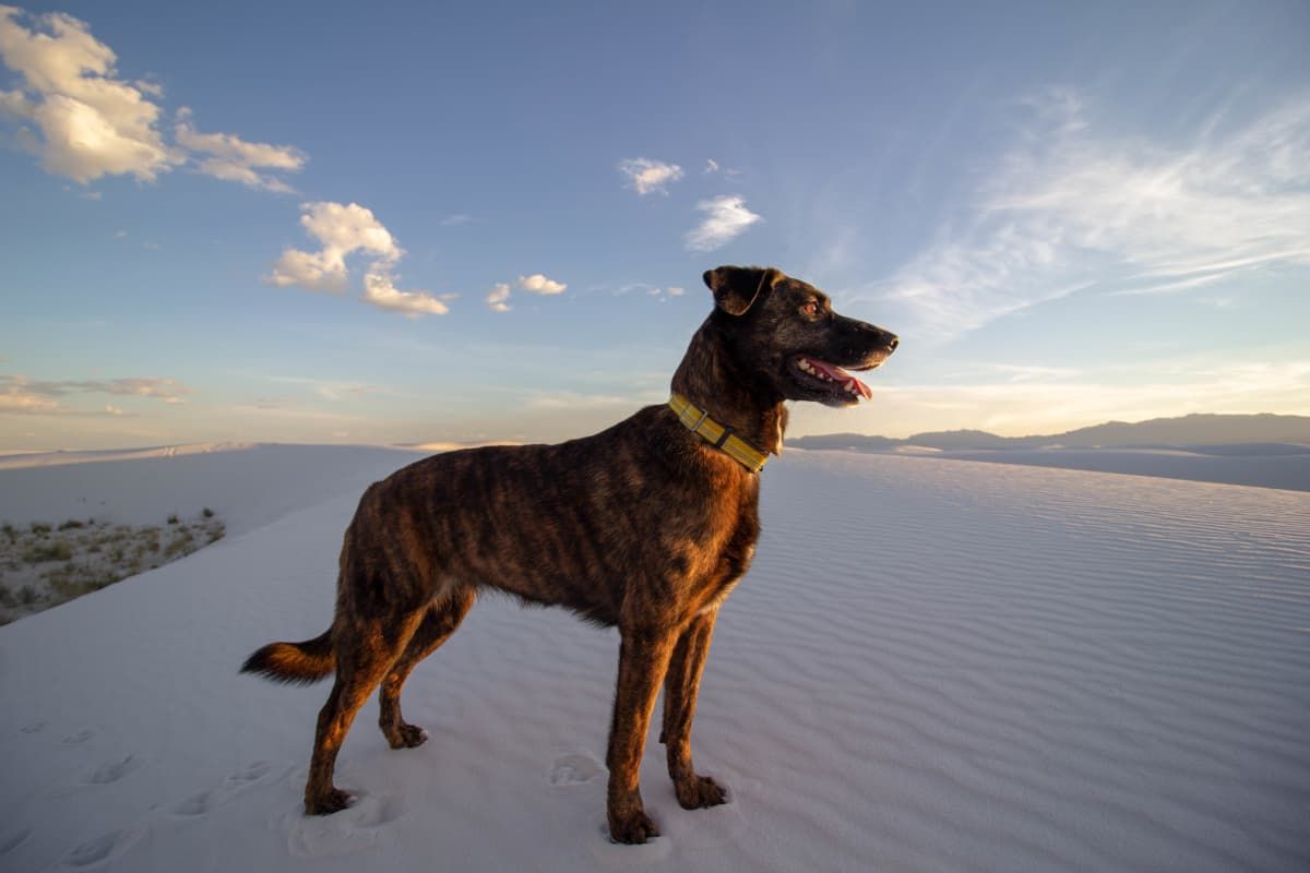 white sands dog hikes