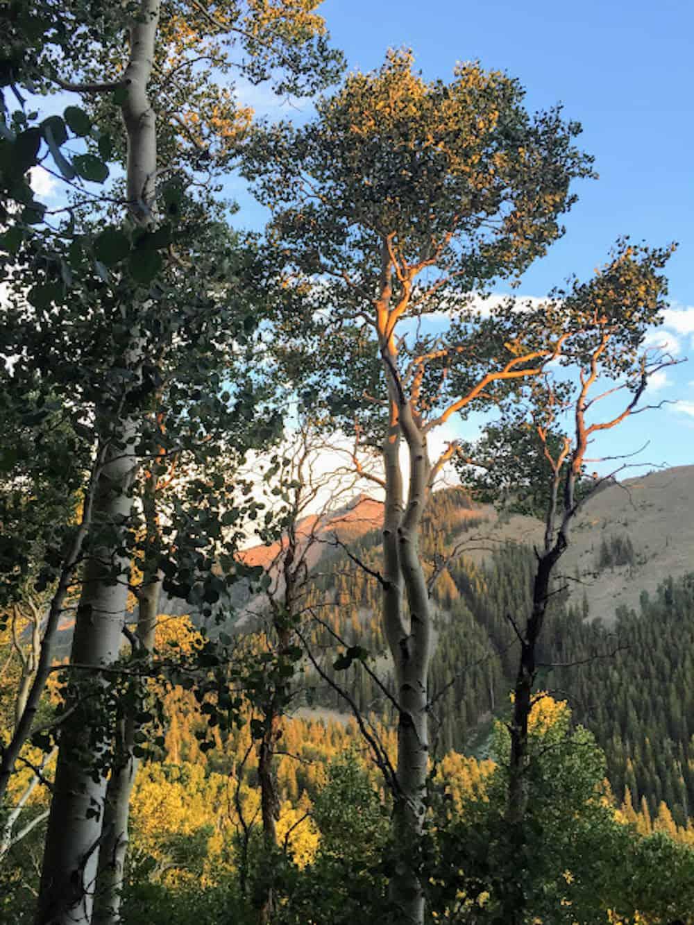 La Sal National Forest