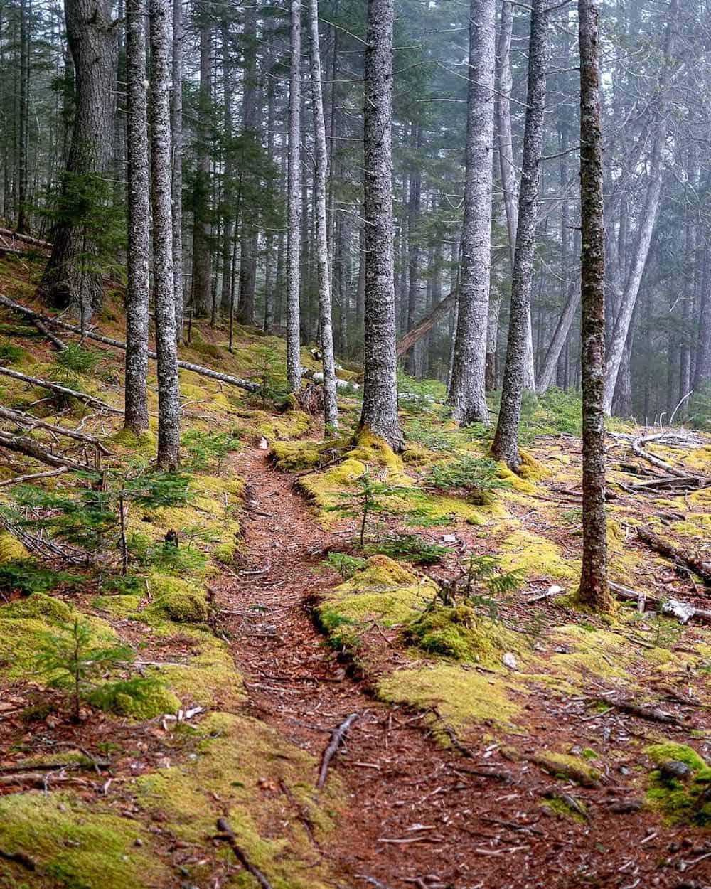 Hunters Brook Trail
