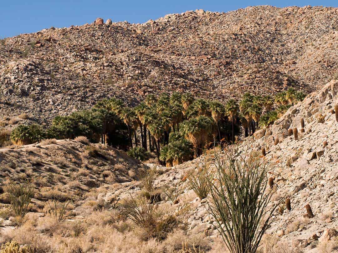mountain palm spring