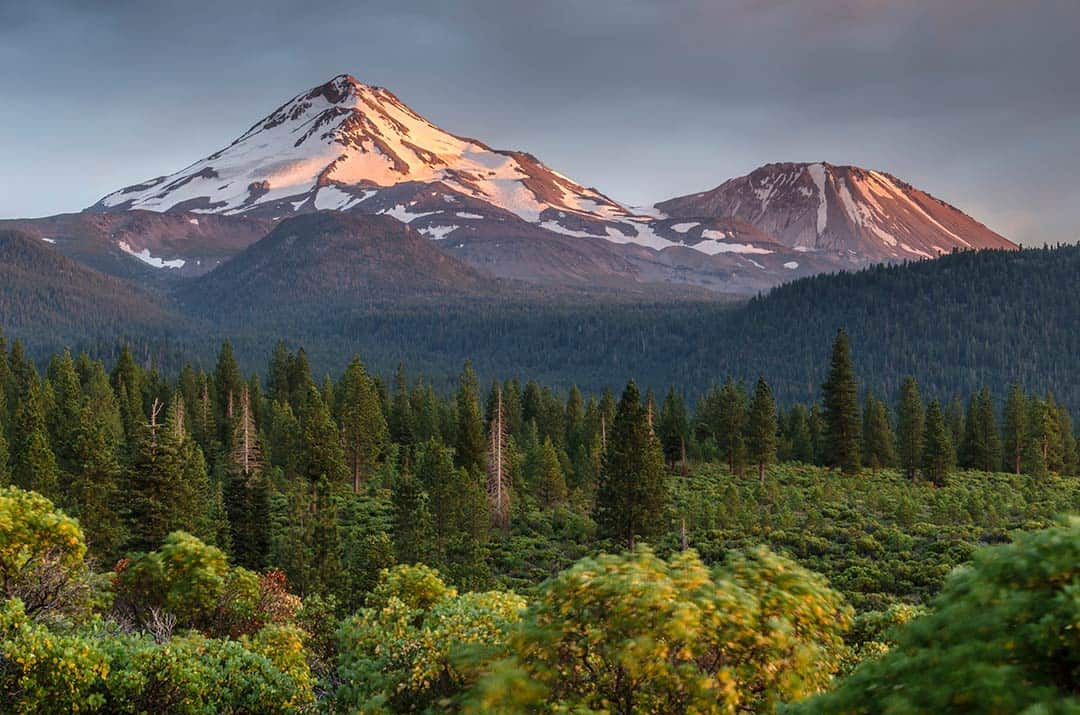 shasta-trinity national forest