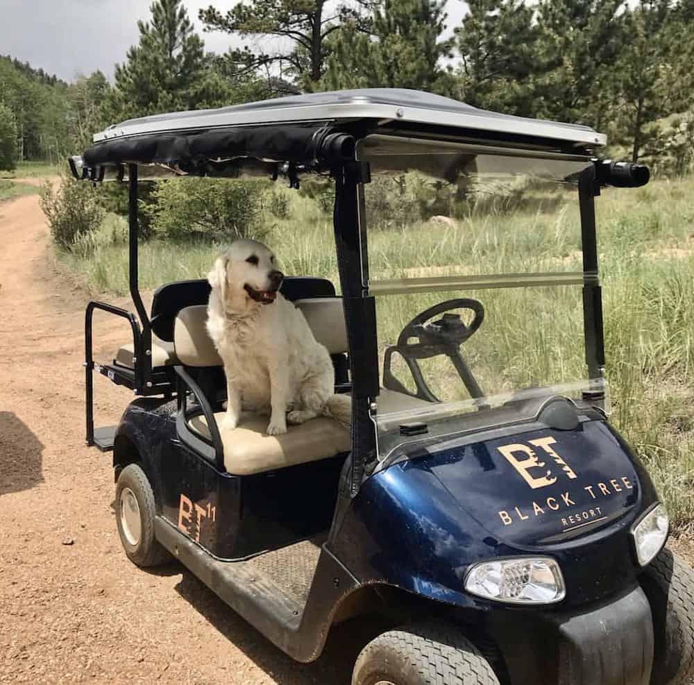 Golf cart at Black Tree Resort