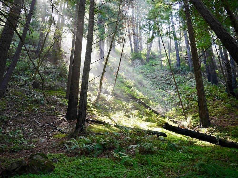 Ewoldsen Trail in Big Sur California