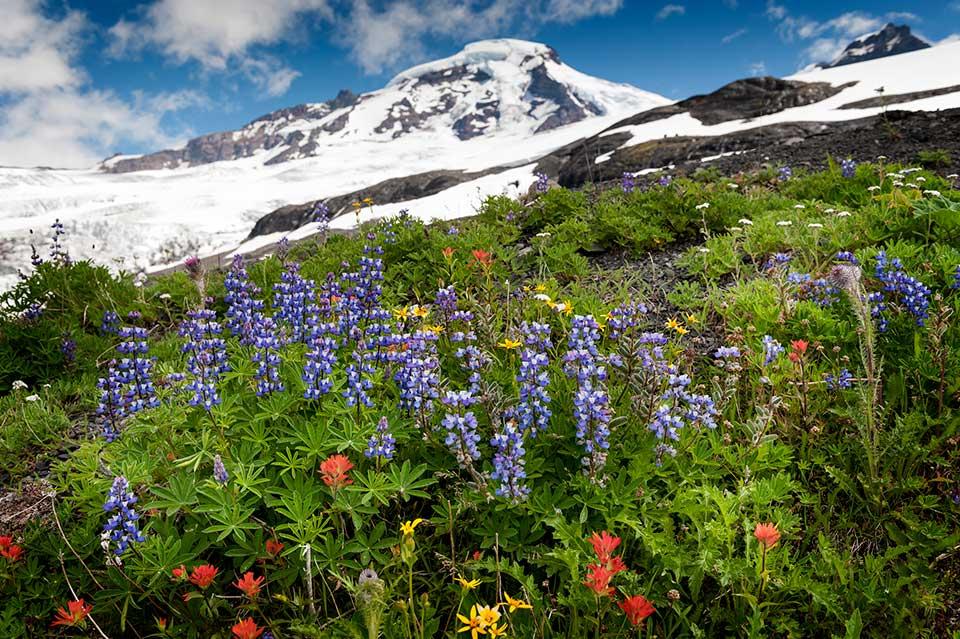 Heliotrope Ridge Mount Baker