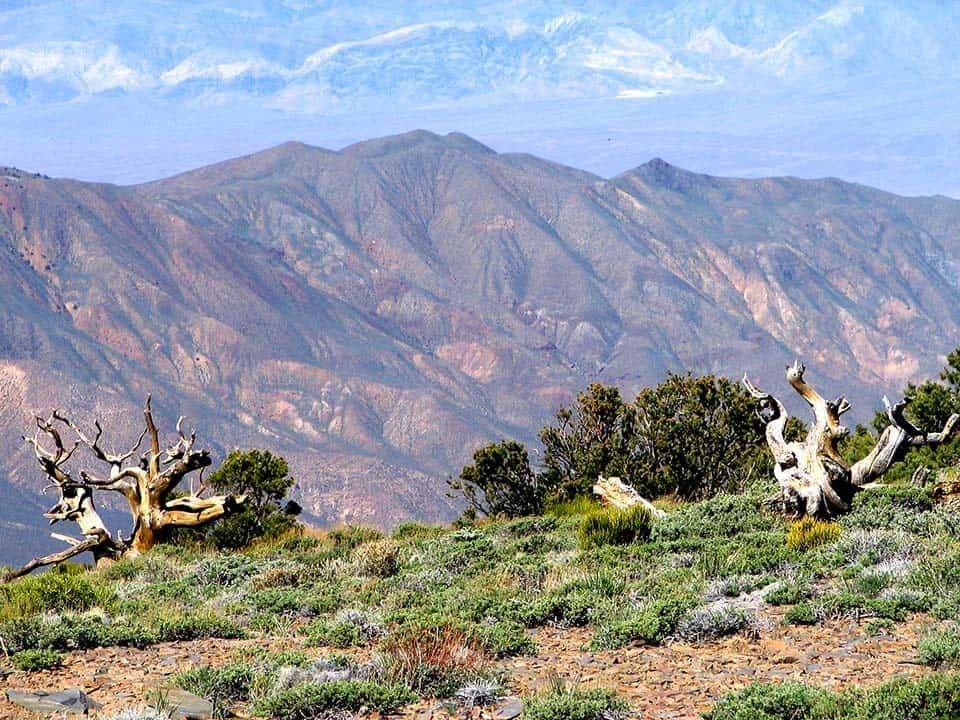 wildrose peak death valley