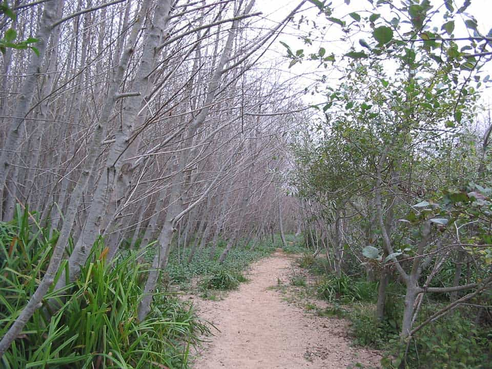 Muddy Hollow Trail