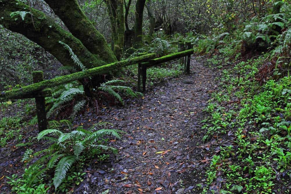 woodpecker nature trail