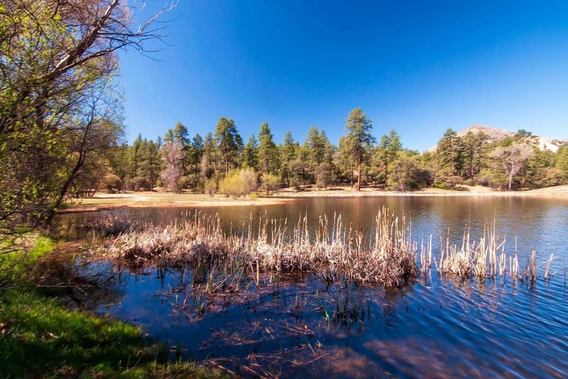 prescott national forest camping