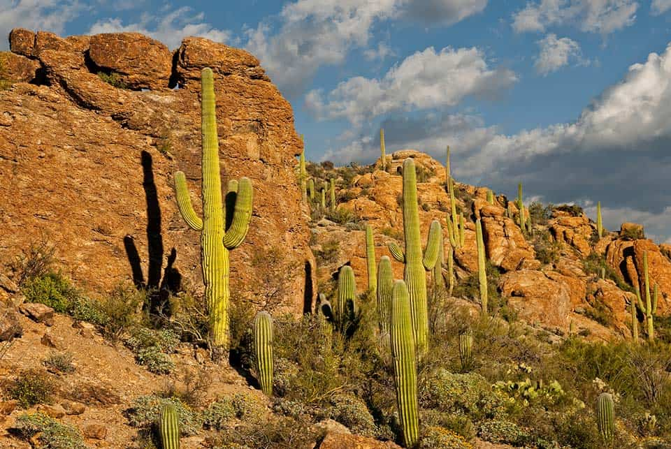 saguaro national park camping