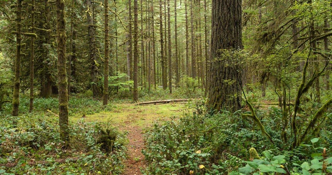 best campgrounds portland oregon