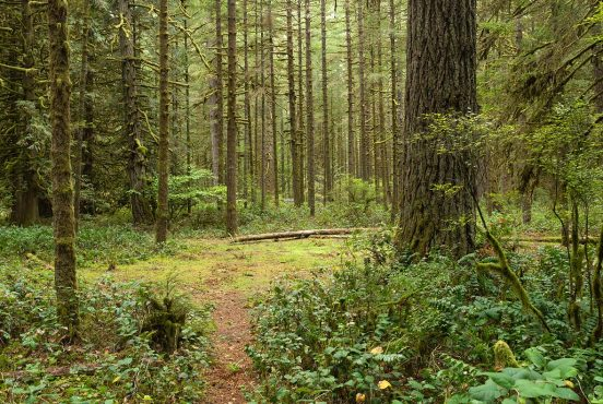 best campgrounds portland oregon