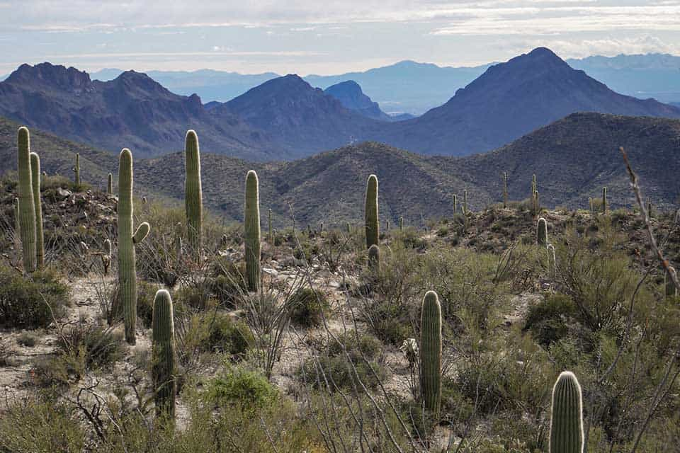 wasson peak trail tucson