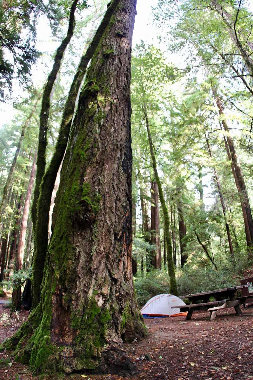 Huckleberry Campground Big Redwoods