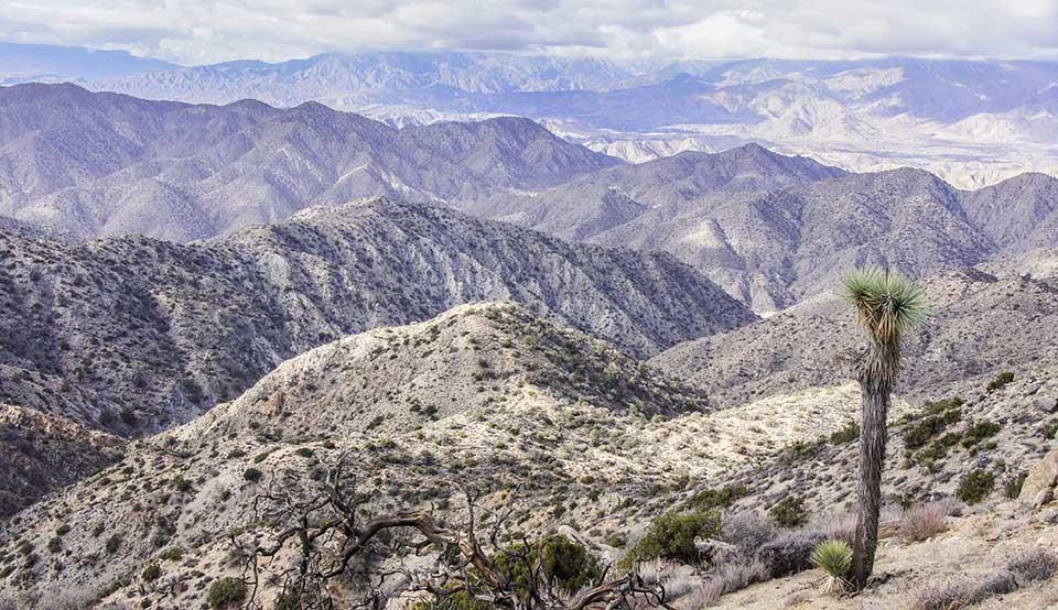 Warren Peak Joshua Tree