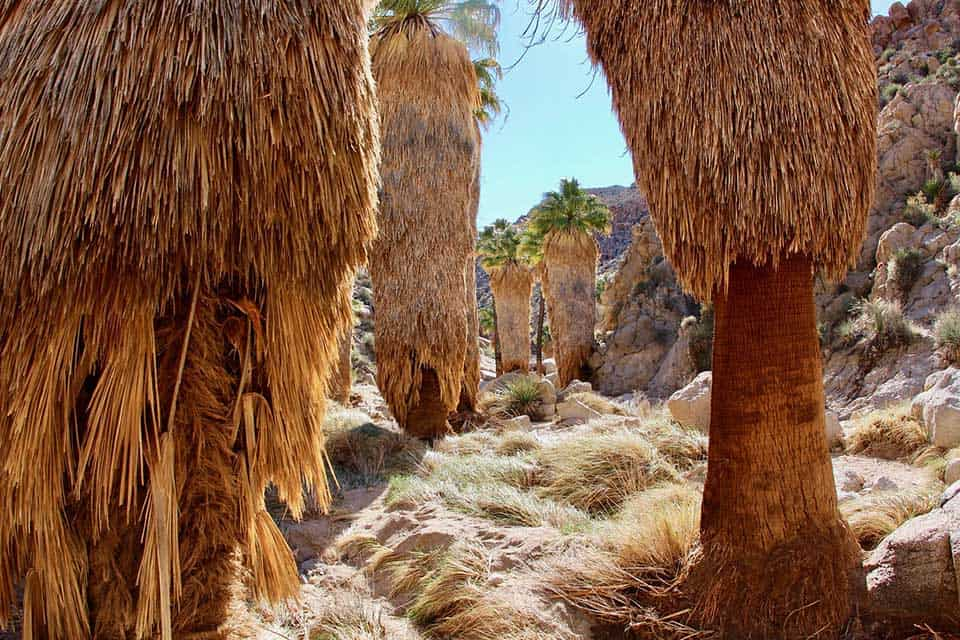 lost palms oasis