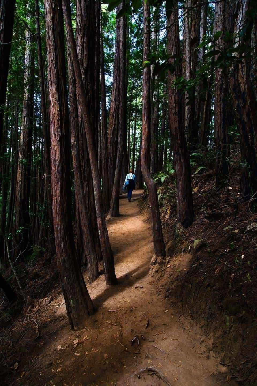 Panoramic LoopMuir Woods