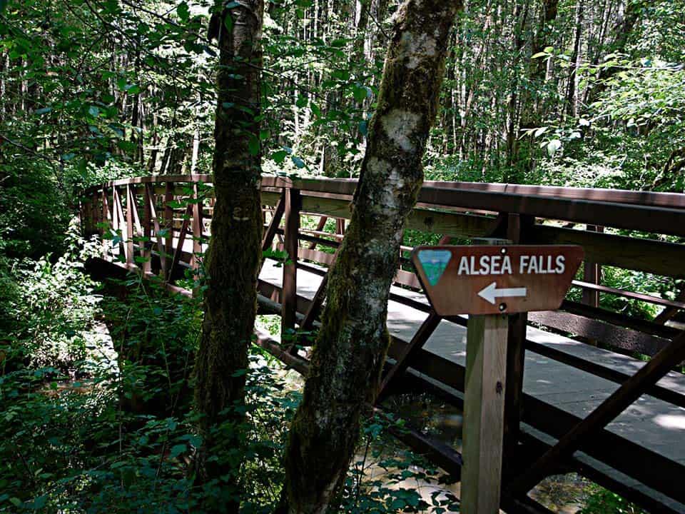 alsea falls trail sign
