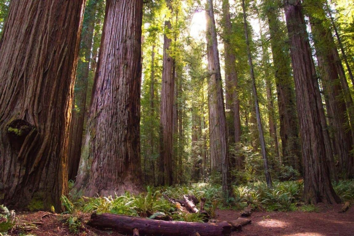 best hikes northern california