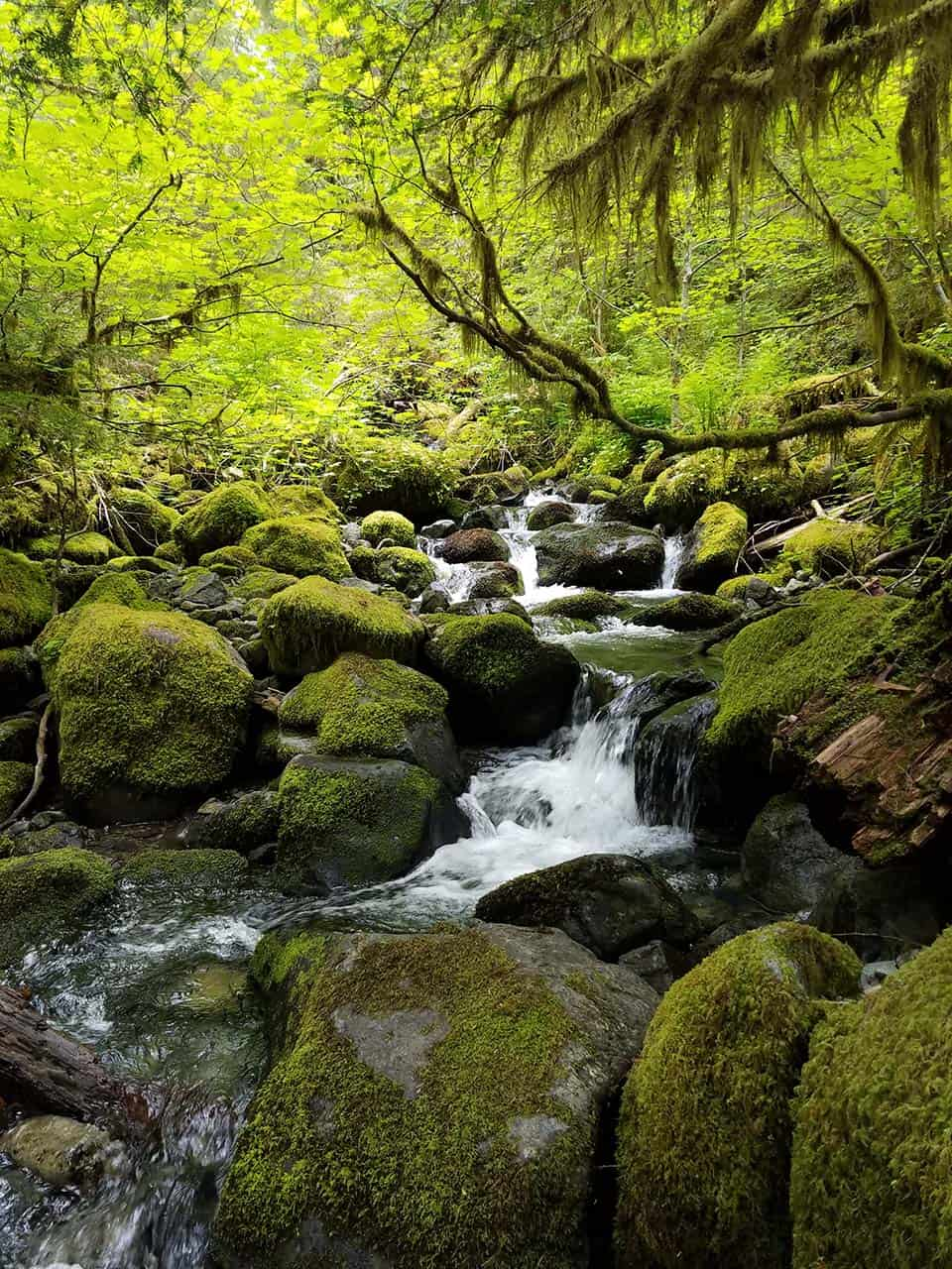 hiking opal creek oregon