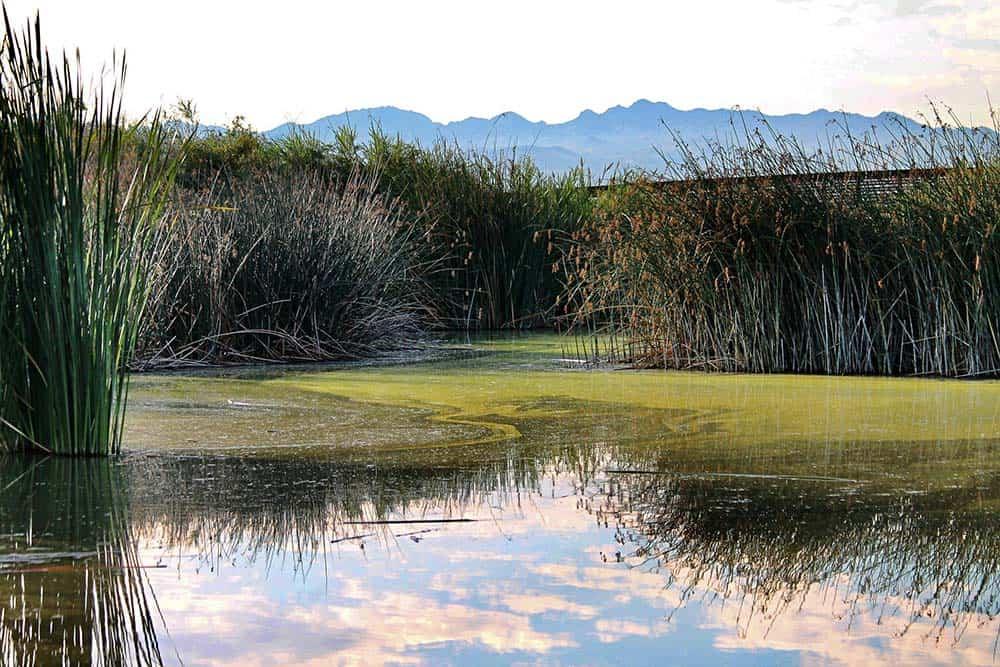 Wetlands Park Nature Preserve Nevada