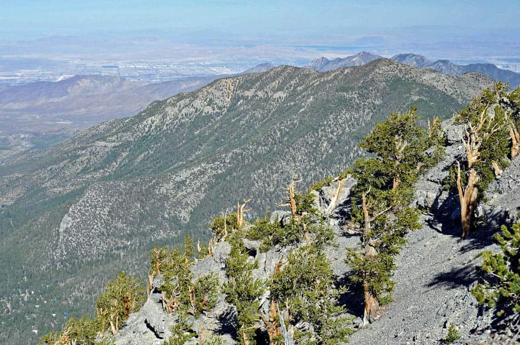 charleston peak south trail