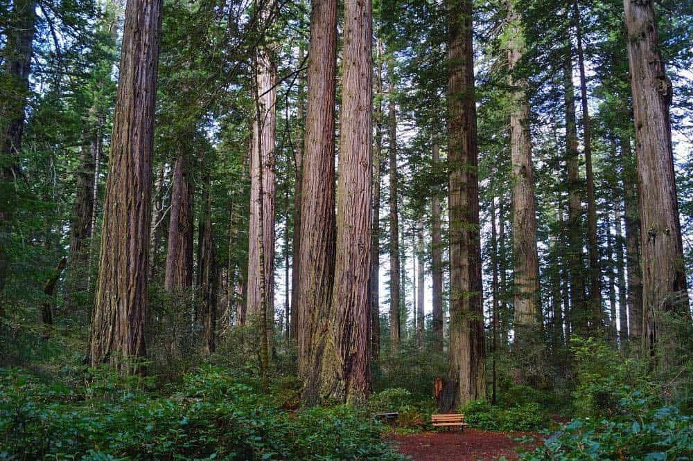 Lady Bird Johnson Grove Nature Trail