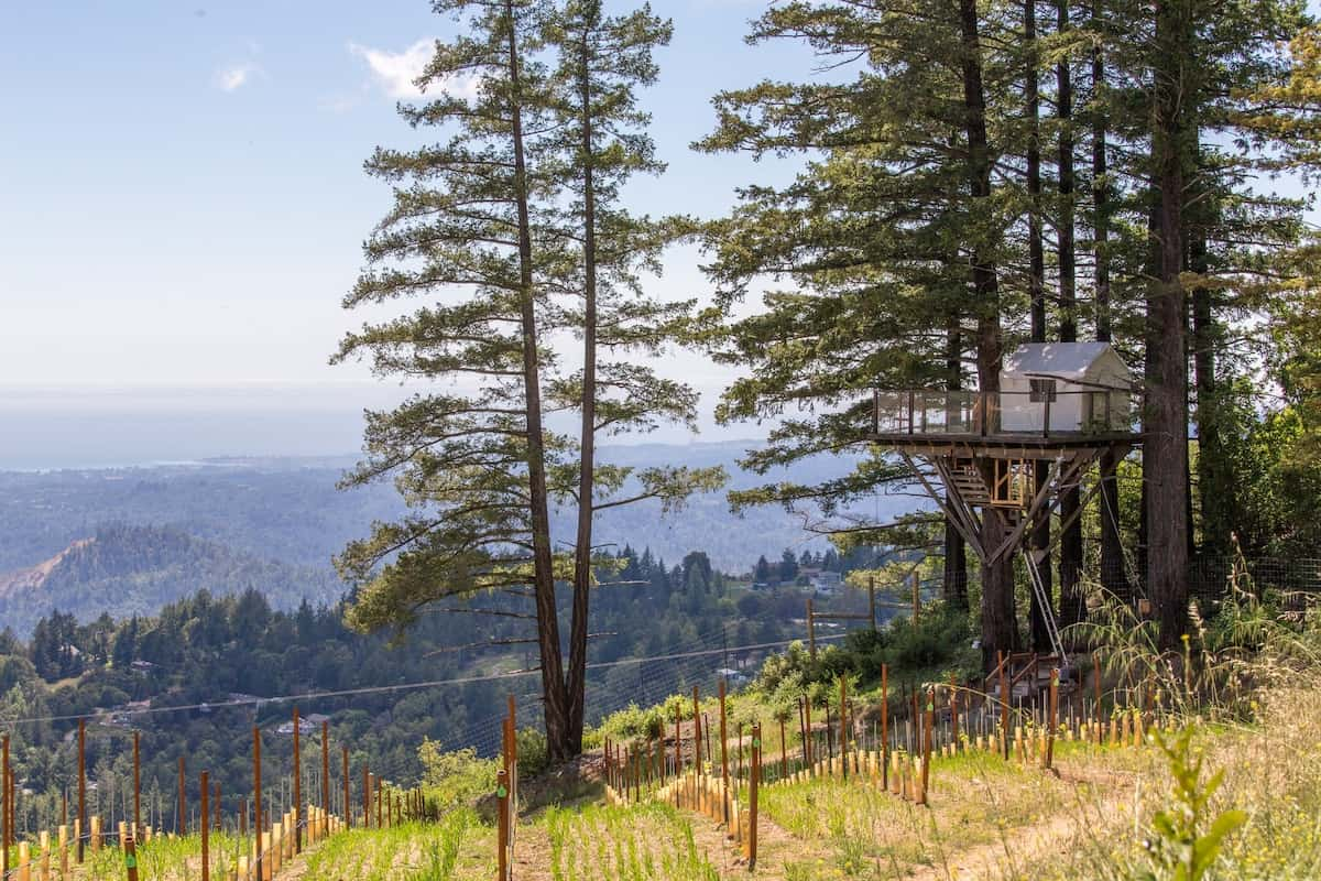 Monterey Bay treehouse rental
