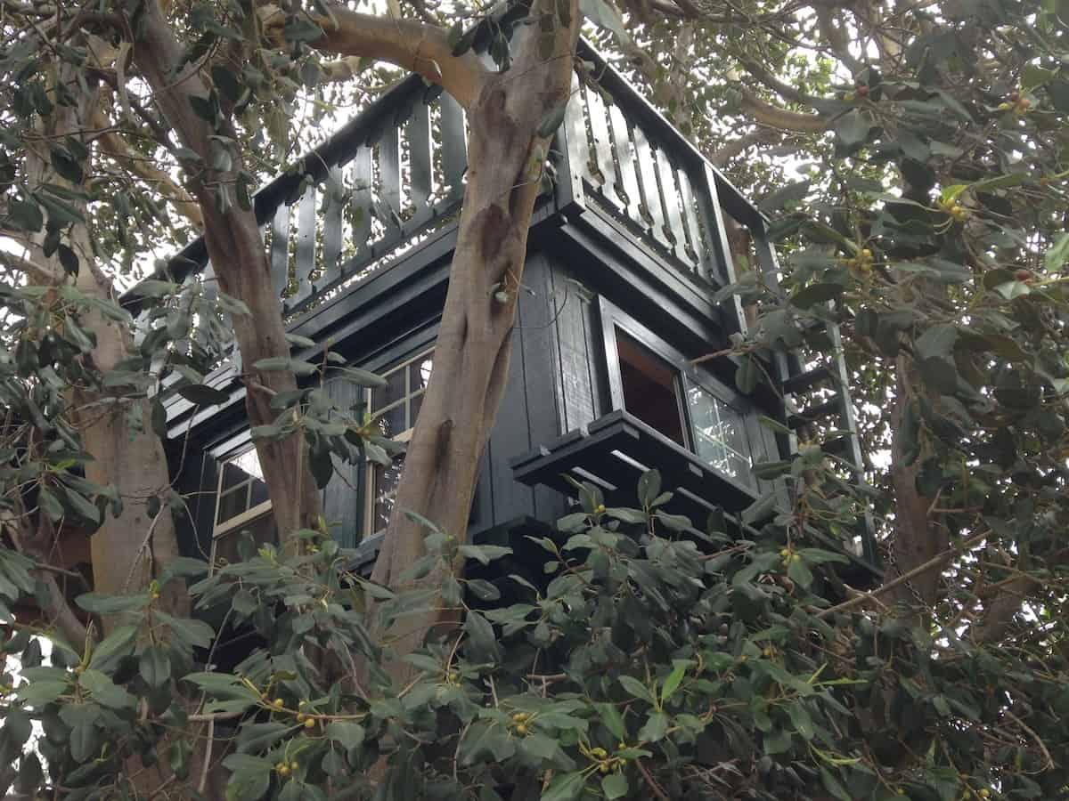 Treehouse Adventure california
