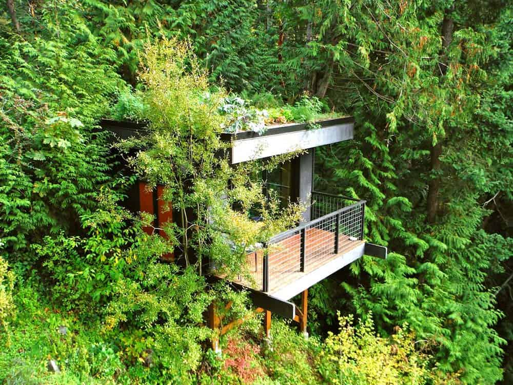 bellingham washington treehouse airbnb