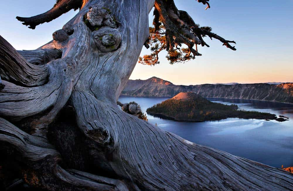 crater lake ancient tree