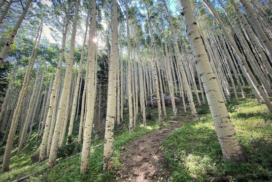 inner basin trail flagstaff arizona