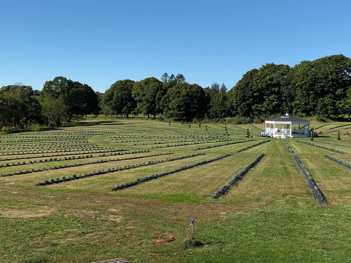 lavendar farm stay rhode island