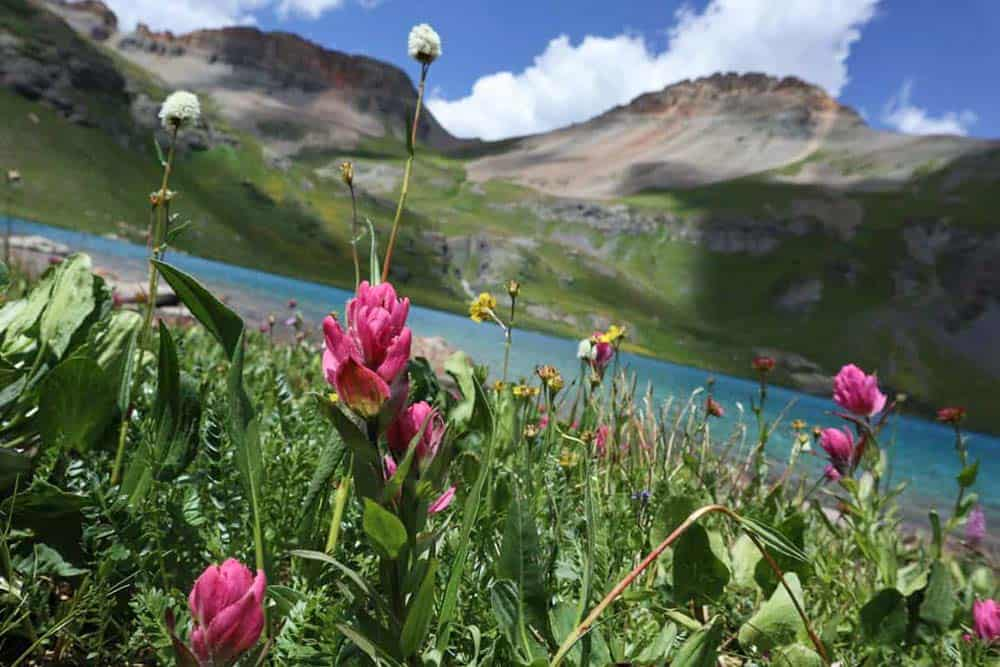 wildflowers ice lake basin