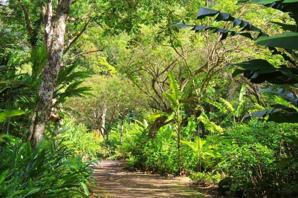 Waimea Valley Trail