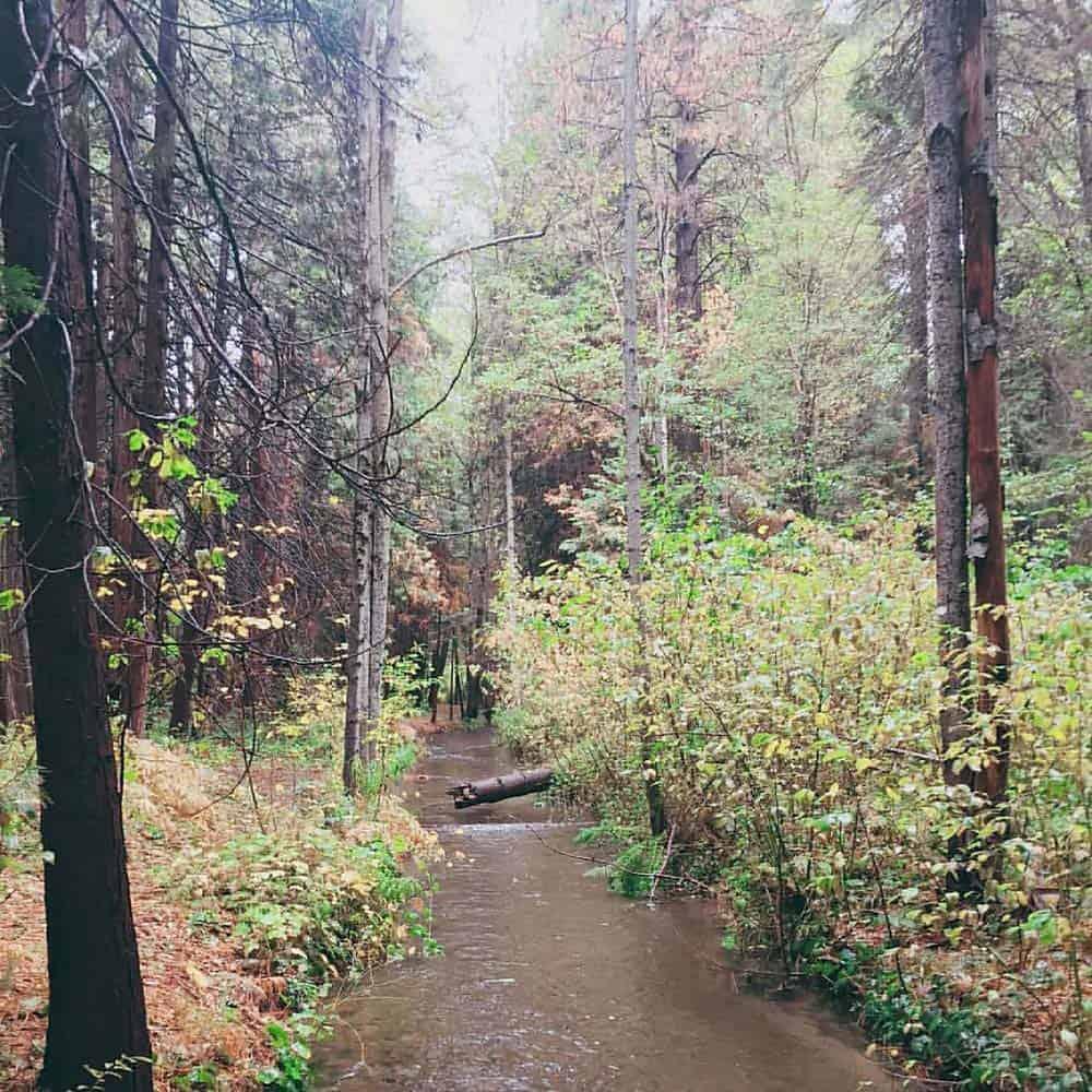 elsa rupp trail