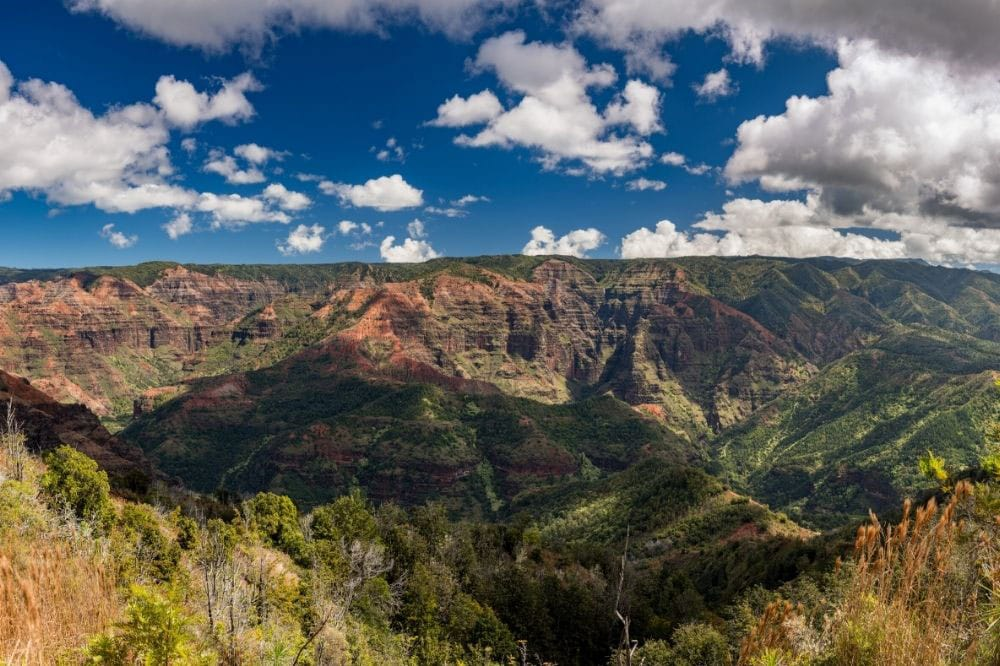 Iliau Nature Loop Kauai