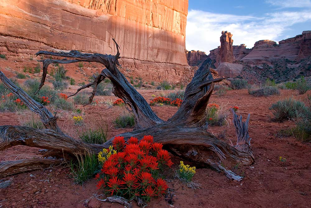 spring arches national park