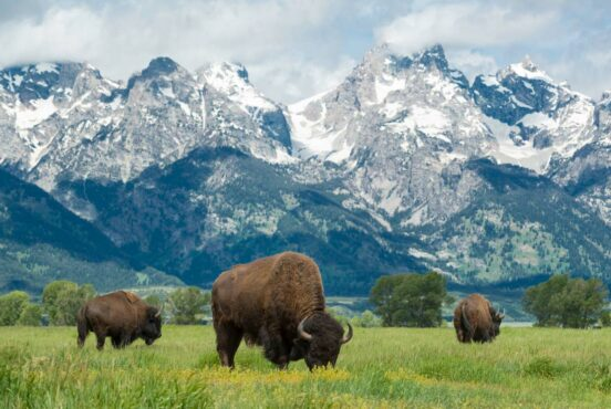 one day in grand teton national park